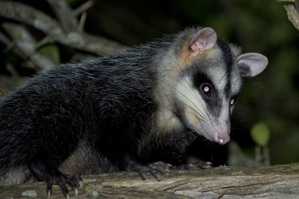 Diga não à liberação da caça no Brasil