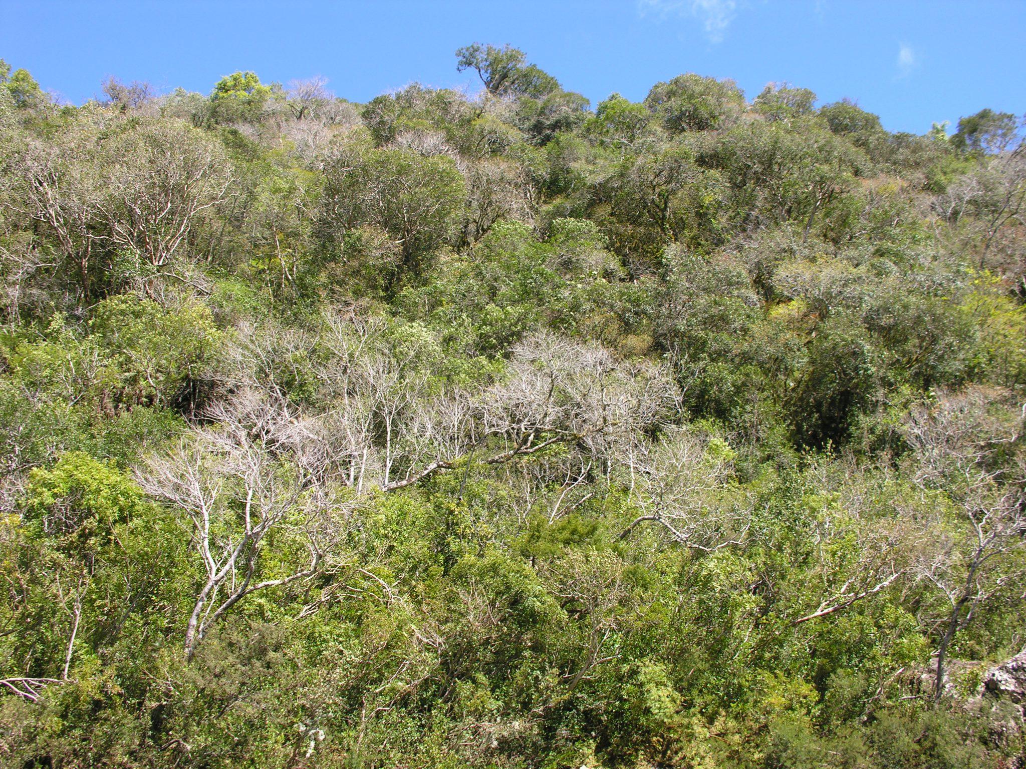 Floresta Estacional Semidecidual 2
