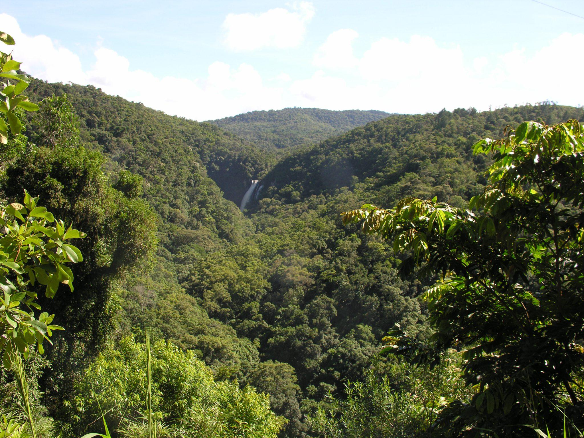 Floresta ombrofila densa 1