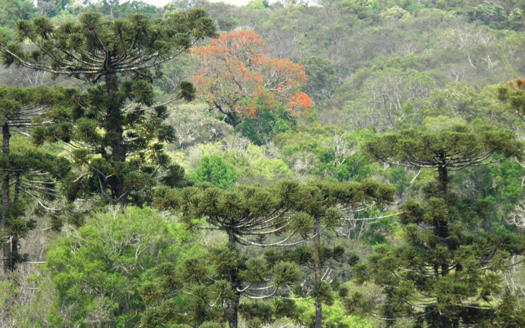 Fatma aprova plano de manejo do Parque Estadual das Araucárias
