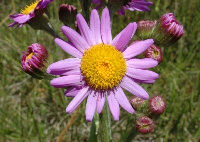 m - flor do campo Miriam Prochnow