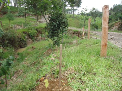Adequação Ambiental de Propriedades Rurais