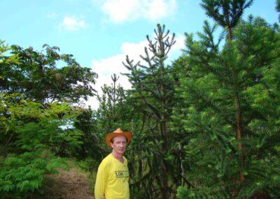 Plantio na propriedade de Wigold Schaffer, 2009.