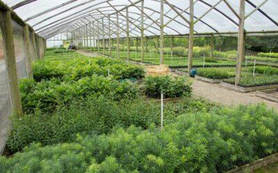Viveiro Jardim das Florestas recebe Prêmio Expressão de Ecologia