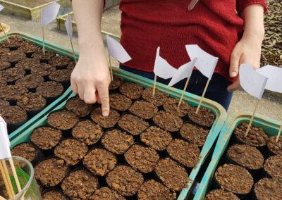 Botando a mão na terra e plantando sementes para colher Pitangas. Foto: Vitor Sá.