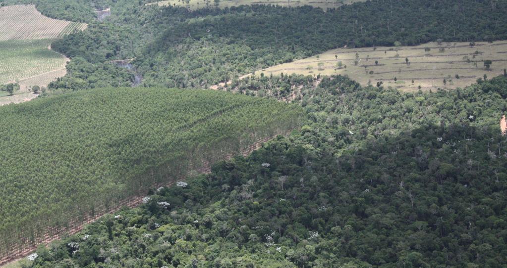 Fórum Florestal do Extremo Sul da Bahia lança novo edital para Monitoramento da Cobertura Vegetal na Bahia