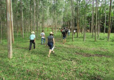 Caminhada na área de silvicultura. Foto: Arquivo Apremavi.